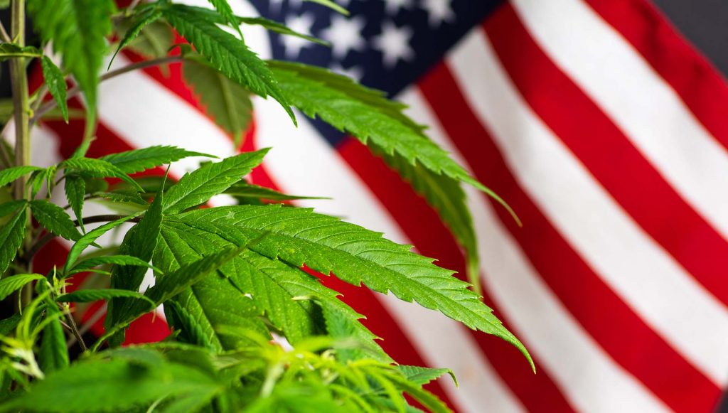 ammerican cannabis consulting