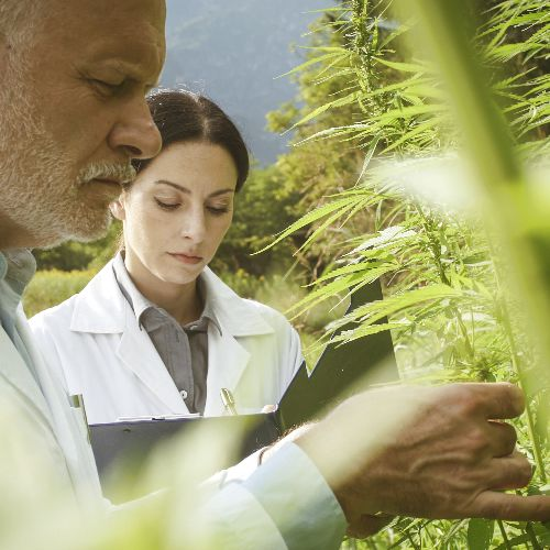 Social Equity and Diversity in the Cannabis Industry