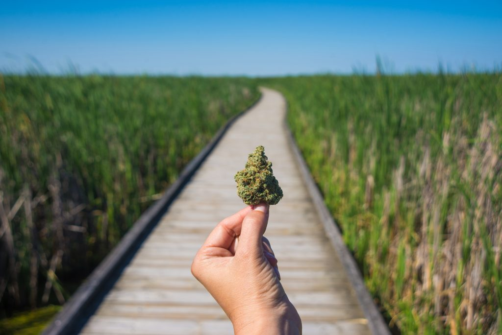 Higher Yields Consulting Which States Are Hot for Medical Marijuana?