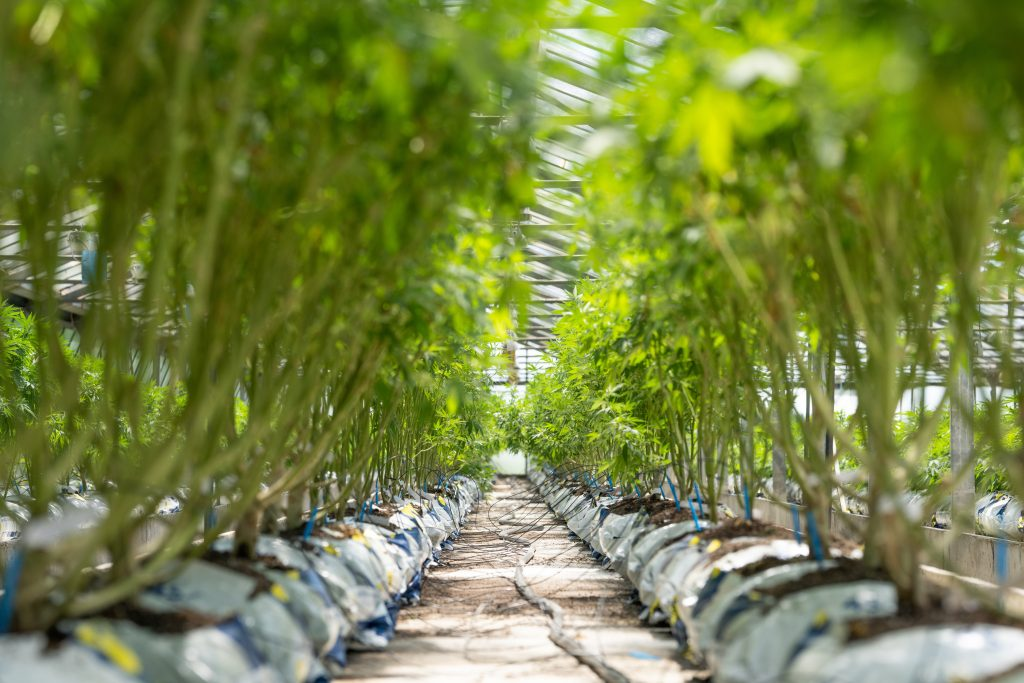 Higher Yields Consulting Cannabis Consulting: Resources for Businesses of All Stages