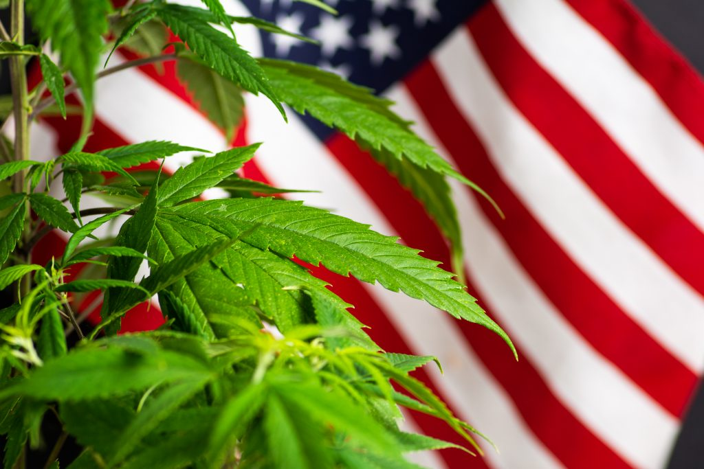 Higher Yields Consulting Hot States With Legal Cannabis for Adult Use