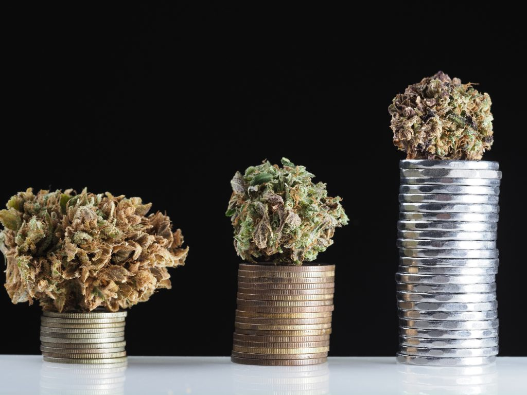 Higher Yields Consulting Buying Cannabis Licenses: New vs. Existing